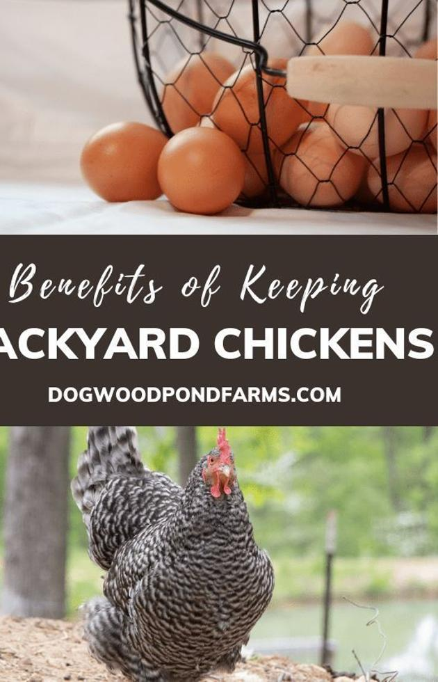 From the eggs to the fertilizer and entertainment, keeping ...